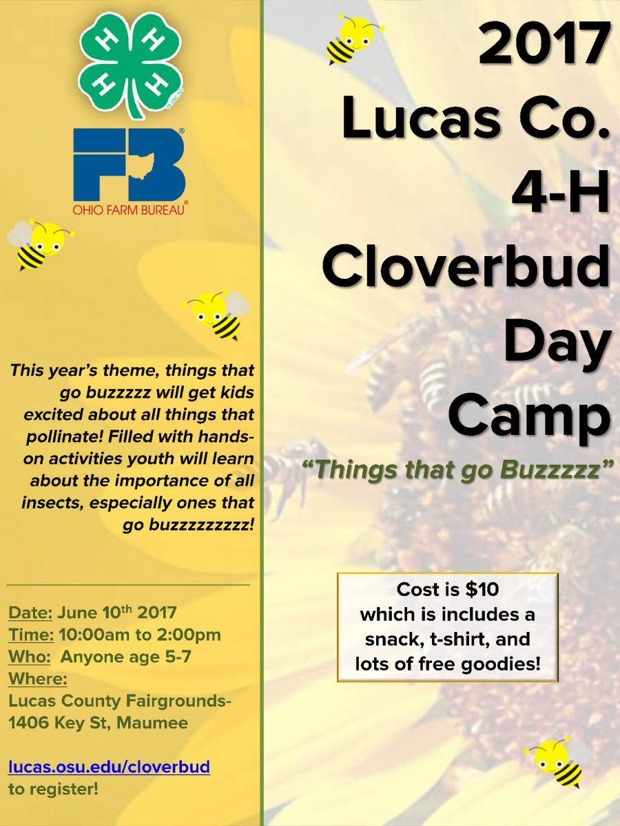 Cloverbud Camp Flyer